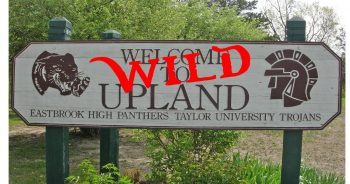 2020 - Side Project Wild Upland