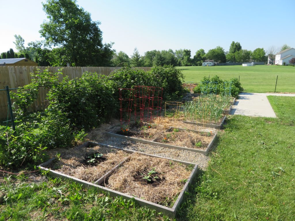 Knight family garden beds.